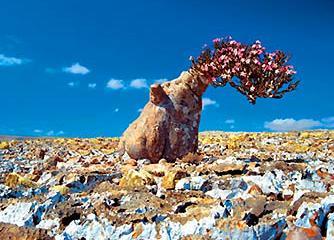 ソコトラ島の画像 p1_4